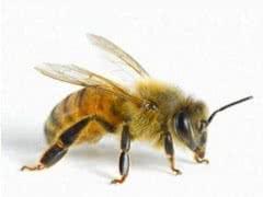 Продаём пчёл для пчелоужаления и сопутствующие товары