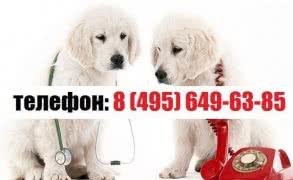 Ветеринарные услуги с бесплатным выездом на дом