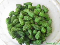 Продам зеленую сосновую шишку 248 р, гриб лисичку 150р