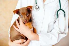 Вызов ветеринара на дом в Ставрополе