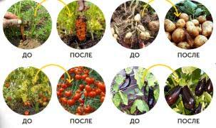Активированный торфогумат Ольховского